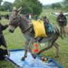 2011 juillet concours d'utilisation au Haras du Pin, qualification «loisirs» pour SALTO