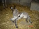 30 mai 2012 naissance de Chardon