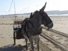 Rando sur la côte Granvillaise